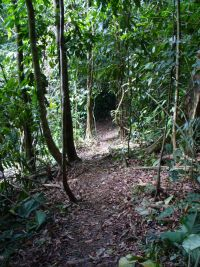 dominical hiking trail